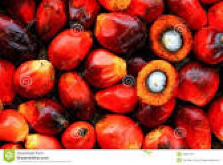 livraison de la graine,maniocs et touts autres condiments
